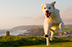 Pets Welcome holidays in Cornwall